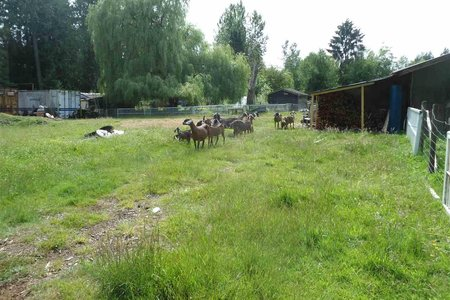 R2393796 - 26215 84 AVENUE, County Line Glen Valley, Langley, BC - House with Acreage