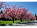 V1102160 - 1540 Taylor Way, West Vancouver, British Columbia, CANADA